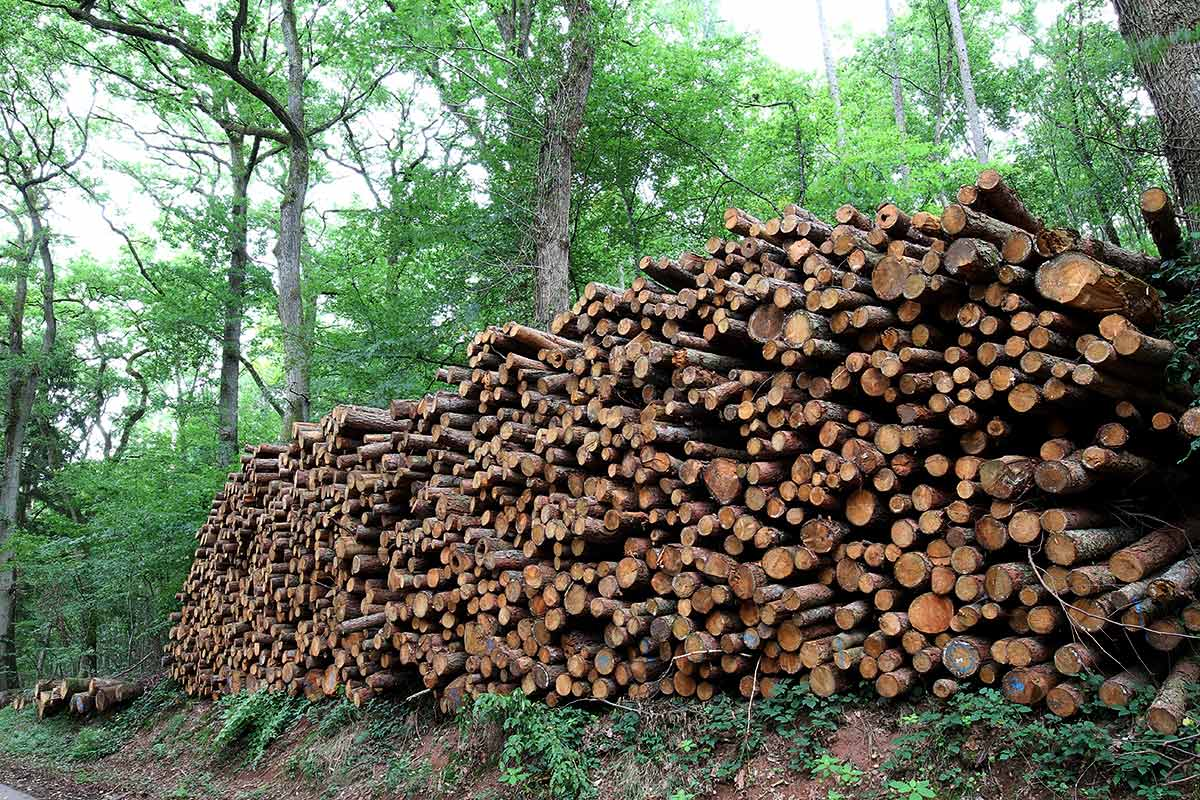 Aufgeschichtete Holzstämme am Waldrand 2