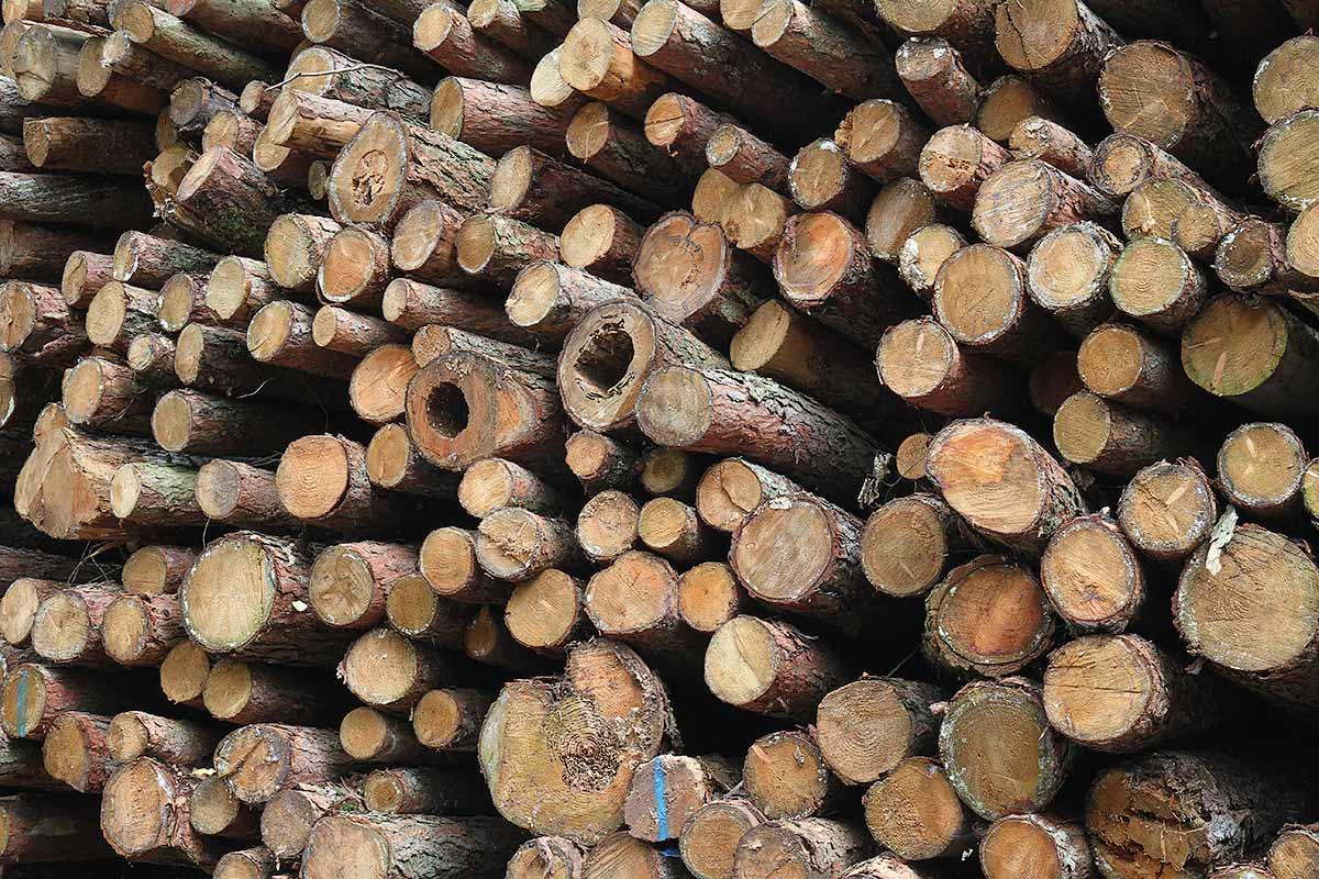 Aufgeschichtete Holzstämme am Waldrand 5