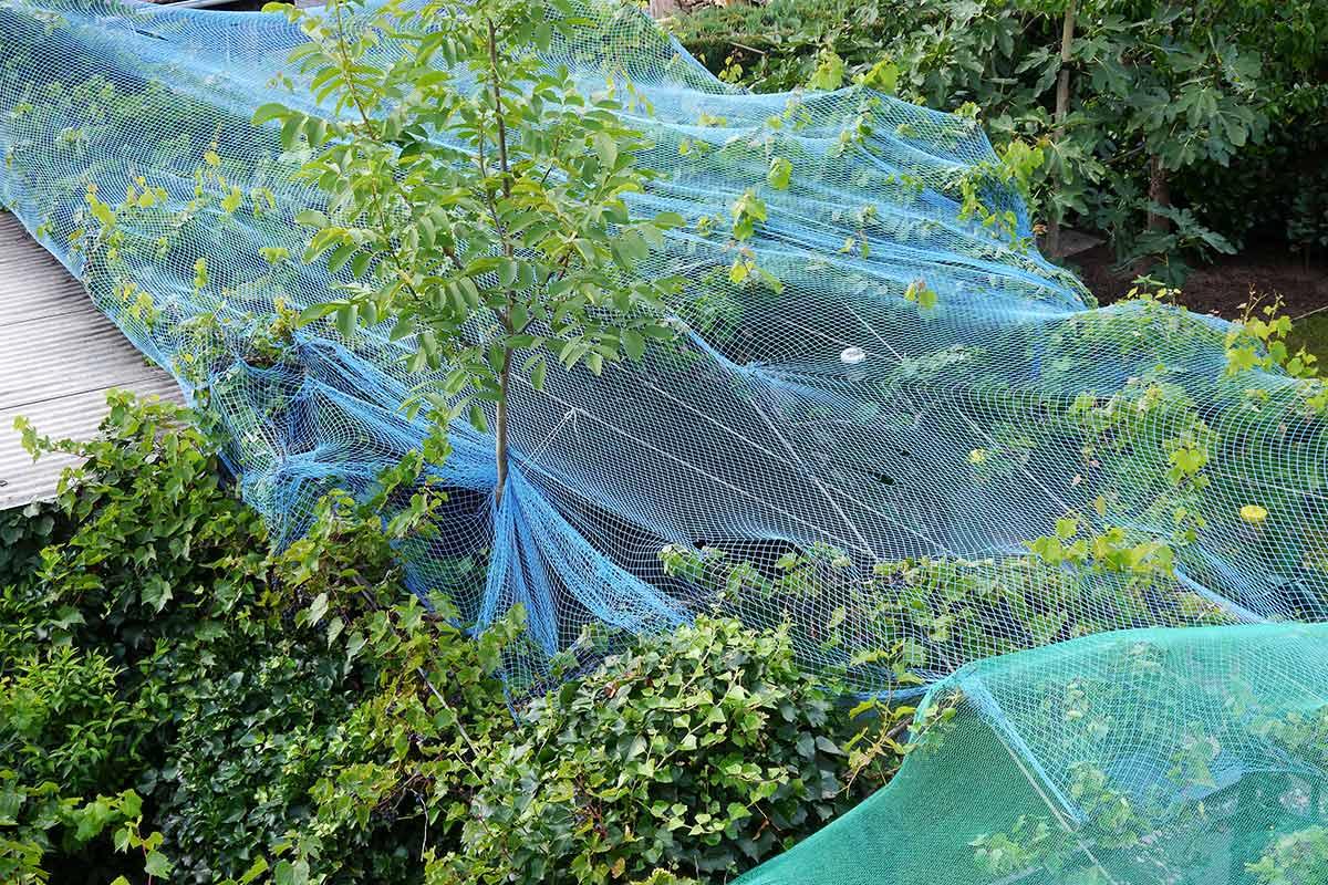 Schutznetze für Weinreben